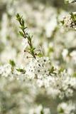wiosna drzewo Obrazy Royalty Free
