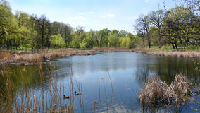 Wiosna dzień na jeziorze Obraz Royalty Free