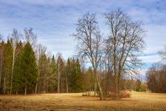 Wiosna dzień przy parkiem Pavlovsk saint petersburg Obraz Stock