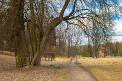 Wiosna dzień w parku Pavlovsk Obrazy Stock