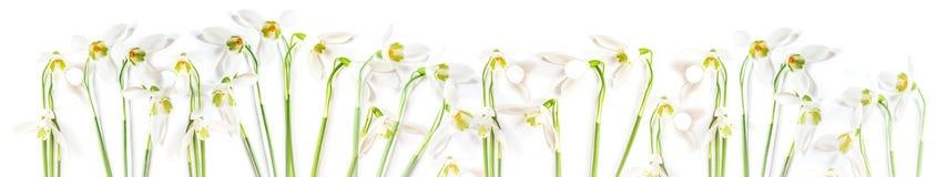 Wiosna flatlay śnieżyczka kwitnie na białym tle Nega Zdjęcie Royalty Free
