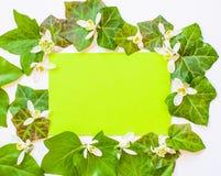 Wiosna flatlay bluszcz opuszcza z białymi kwiatami i zieleni pa Zdjęcie Stock