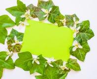 Wiosna flatlay bluszcz opuszcza z białymi kwiatami i zieleni pa Obrazy Stock