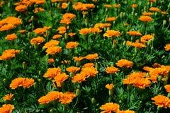 Wiosna Formalny ogród kwiatu piękny kolorowy ogród fotografia royalty free