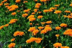 Wiosna Formalny ogród kwiatu piękny kolorowy ogród obrazy stock