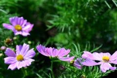 Wiosna Formalny ogród kwiatu piękny kolorowy ogród zdjęcie royalty free