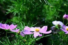 Wiosna Formalny ogród kwiatu piękny kolorowy ogród obraz royalty free