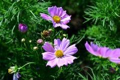 Wiosna Formalny ogród kwiatu piękny kolorowy ogród zdjęcia royalty free