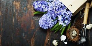 Wiosna hiacynt, Easter jajka i ogrodowi narzędzia, Obraz Stock