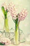 Wiosna hiacynty Fotografia Royalty Free