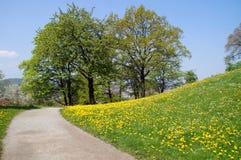 Wiosna i dandelion Obrazy Royalty Free