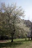 Wiosna i kwitnący drzewo obrazy stock