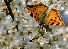 Wiosna i motyl Obraz Stock