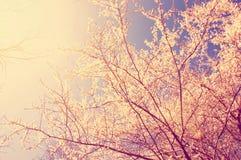 Wiosna i natura Zdjęcia Royalty Free