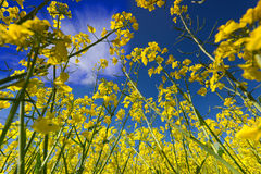 Wiosna i niebo zdjęcia royalty free