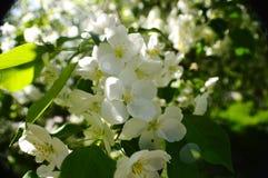 Wiosna jabłczani sady zdjęcie stock
