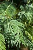 Wiosna jaskrawa - zielona paproć obrazy stock