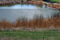 Wiosna jezioro Zdjęcia Stock