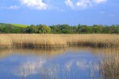 Wiosna jezioro odbija niebieskie niebo Zdjęcie Royalty Free