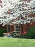 Wiosna kolor Fotografia Royalty Free