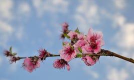 Wiosna kolor Zdjęcia Stock