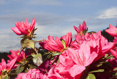 Wiosna kolor Obrazy Royalty Free