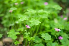 Wiosna kolor Zdjęcie Royalty Free