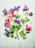 Wiosna kolorowi ogrodowi kwiaty, kolombiny lub akelei, Komponujący na lekkim drewnianym tle, odgórny widok Zdjęcie Stock