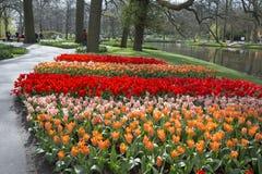 wiosna kolorowi tulipany fotografia royalty free