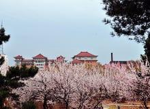 Wiosna komes antyczny miasto zdjęcie stock