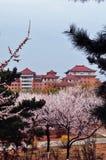 Wiosna komes antyczny miasto zdjęcia stock