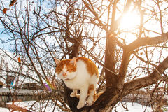 Wiosna kot na drzewie obrazy royalty free