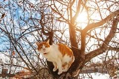 Wiosna kot na drzewie zdjęcia stock