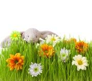 Wiosna królik na zielonej trawie i kwiaty Zdjęcia Stock