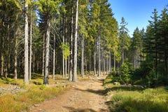 Wiosna krajobraz, Špičák, ośrodek narciarski, Artystyczny las, republika czech (Šumava) Zdjęcia Royalty Free