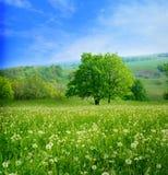 Wiosna krajobraz zdjęcie royalty free