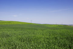 Wiosna krajobraz Zdjęcie Stock