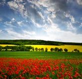 Wiosna krajobraz Fotografia Royalty Free