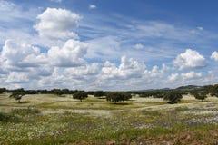 Wiosna krajobraz Alentejo krajobraz między wioską Fl Fotografia Royalty Free