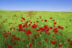 Wiosna krajobraz - czerwoni maczki Zdjęcia Stock