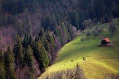 Wiosna krajobraz w otręby fotografia stock