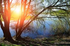 Wiosna krajobraz - wierzba pod światłem słonecznym blisko rzeki Zdjęcia Stock