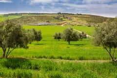 Wiosna krajobraz wokoło Fes, Maroko fotografia stock
