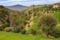 Wiosna krajobraz wokoło Fes, Maroko obraz stock