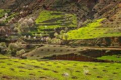 Wiosna krajobraz wokoło Fes, Maroko zdjęcie stock
