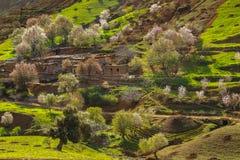 Wiosna krajobraz wokoło Fes, Maroko obrazy royalty free
