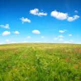 Wiosna krajobraz z czerwonymi maczkami w pszenicznym polu Obraz Stock