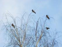 Wiosna krajobraz z drzewem i ptakami Zdjęcia Stock
