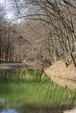 Wiosna krajobraz z jeziorem w lesie obraz royalty free