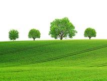 Wiosna krajobraz z kołysań się drzewami i polem Obraz Royalty Free